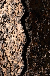 14 pine bark copy 3