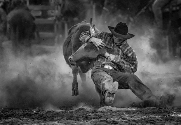 bulldogging_by_suzie_n-d81j1ps